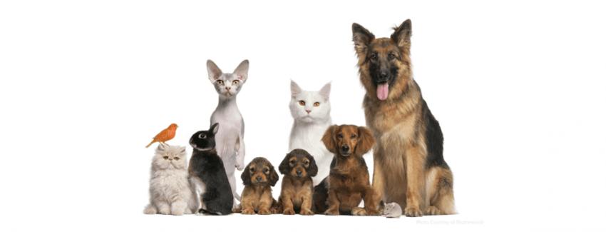 Evcil Hayvanlar Kazanç Kapınız Olabilir