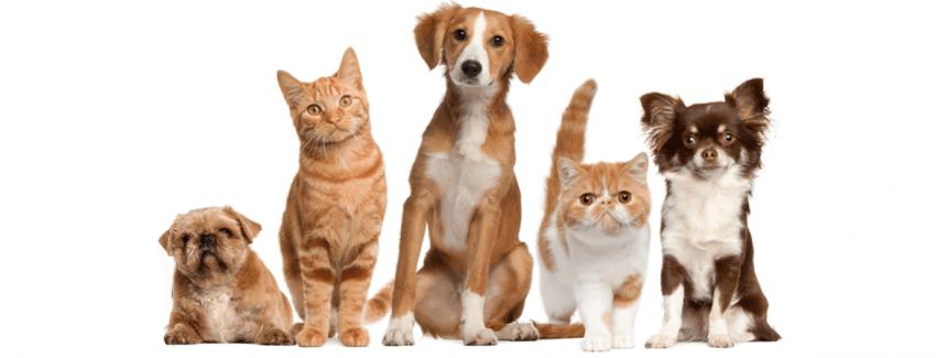 Pet Shop'larda Hayvan Satışı Yasaklanacak