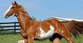 En Kârlı İş Fikirlerinden Biri: At Yetiştiriciliği