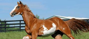At Yetiştiriciliği En Karlı Hayvan Yetiştiriliği İşlerin Biri