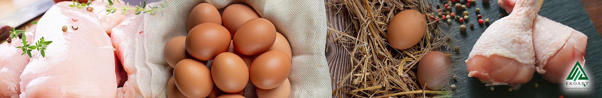 Oyegg Organik Yumurta ve Organik Tavuk Eti