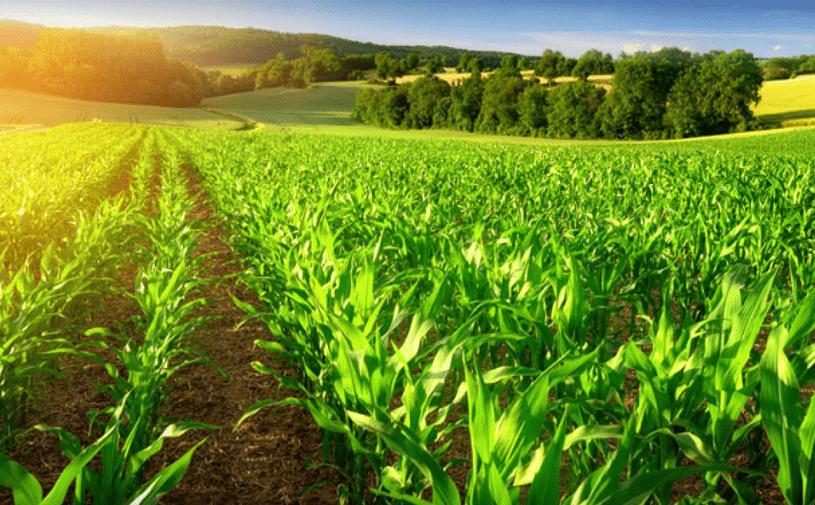 Tarım Sektöründe İş Kurmak